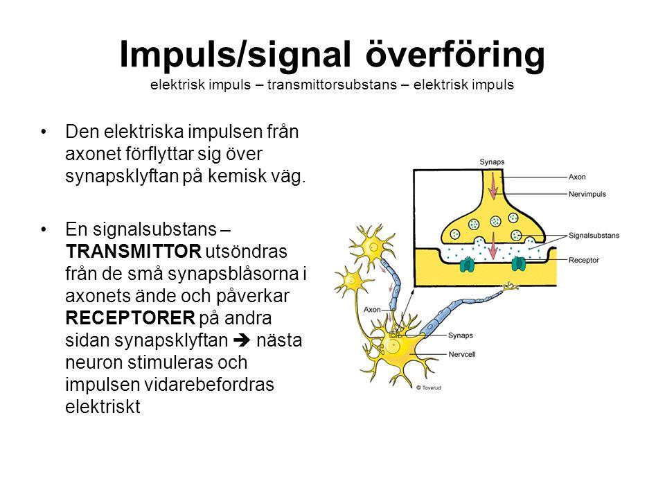 Impuls/signal överföring elektrisk impuls – transmittorsubstans – elektrisk impuls Den elektriska impulsen från axonet förflyttar sig över synapsklyft