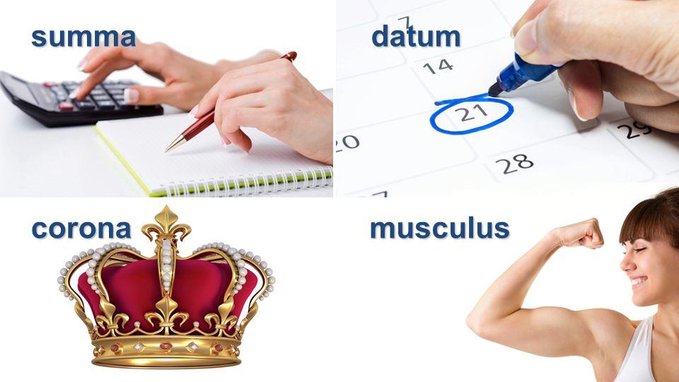 summadatum coronamusculus
