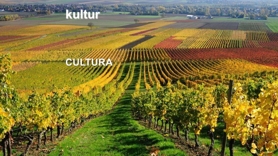 kultur CULTURA