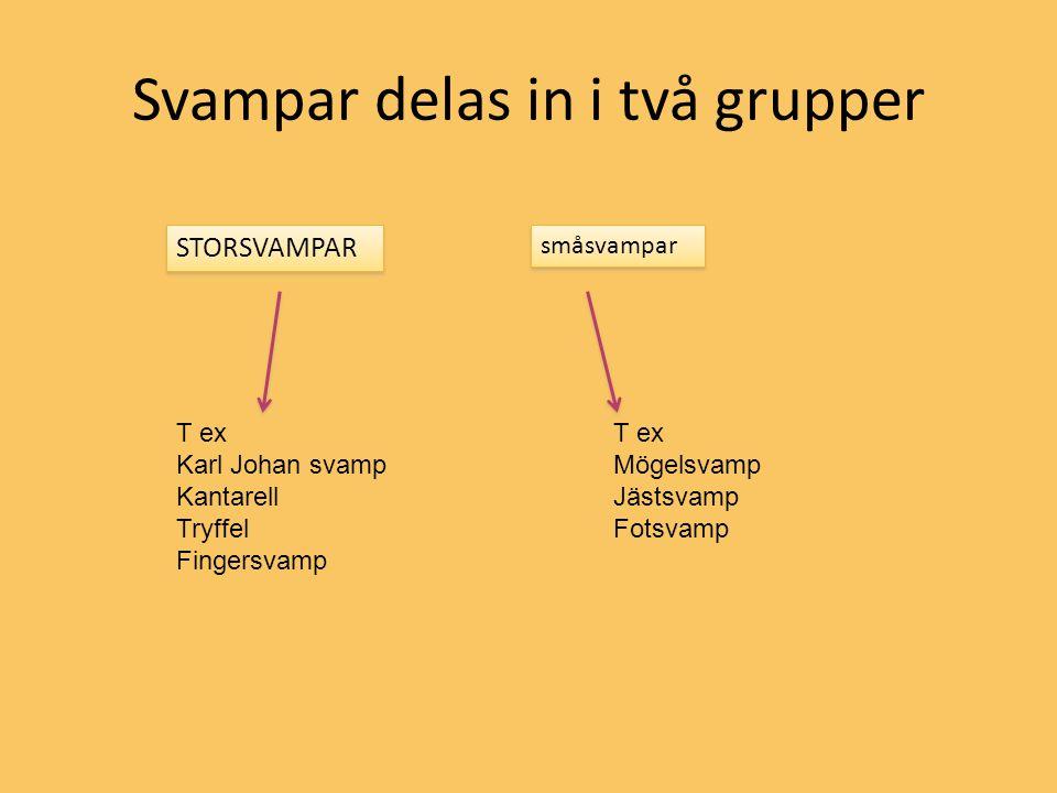 Svampar delas in i två grupper STORSVAMPAR småsvampar T ex Karl Johan svamp Kantarell Tryffel Fingersvamp T ex Mögelsvamp Jästsvamp Fotsvamp