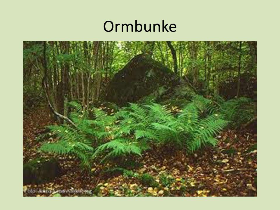 Ormbunke