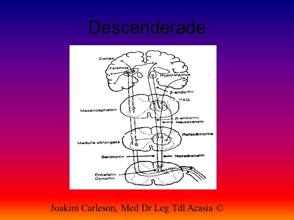 Descenderade Joakim Carleson, Med Dr Leg Tdl Acasia ©