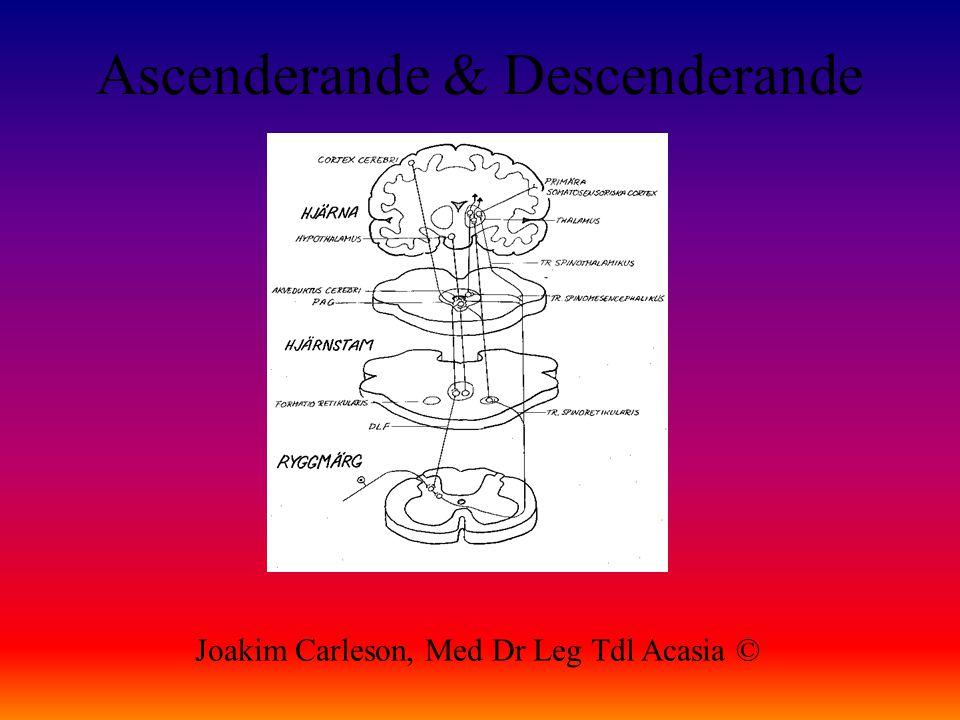 Ascenderande & Descenderande Joakim Carleson, Med Dr Leg Tdl Acasia ©
