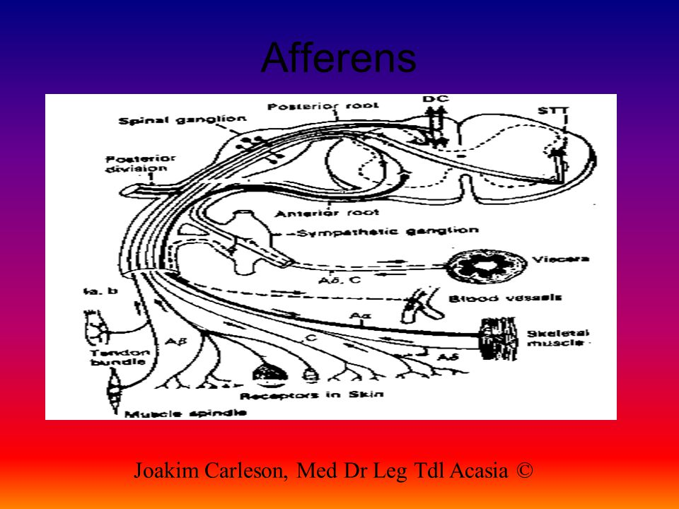 Afferens Joakim Carleson, Med Dr Leg Tdl Acasia ©