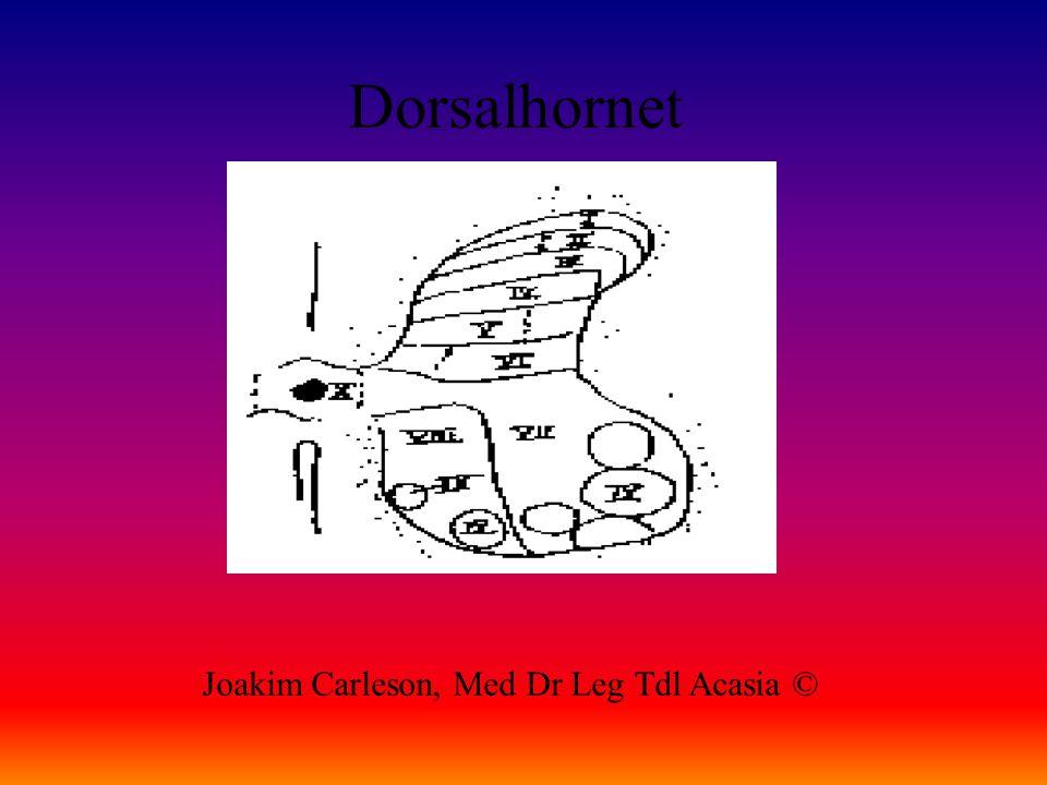 Dorsalhornet Joakim Carleson, Med Dr Leg Tdl Acasia ©