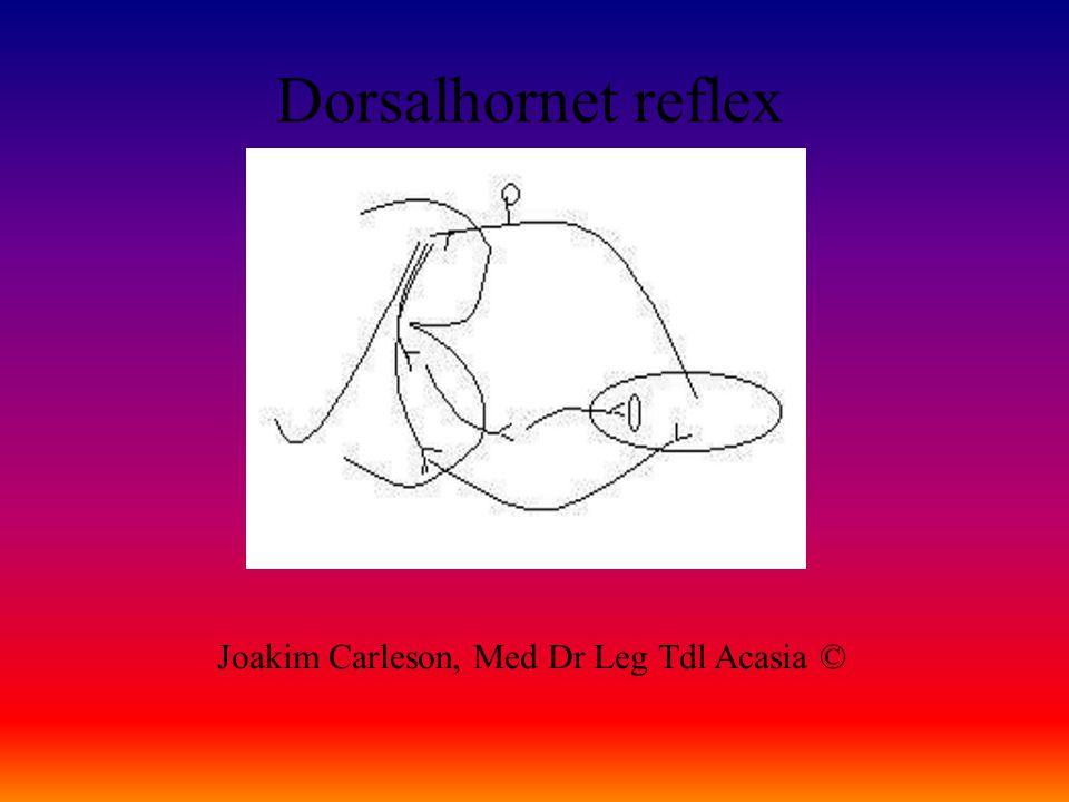 Dorsalhornet reflex Joakim Carleson, Med Dr Leg Tdl Acasia ©