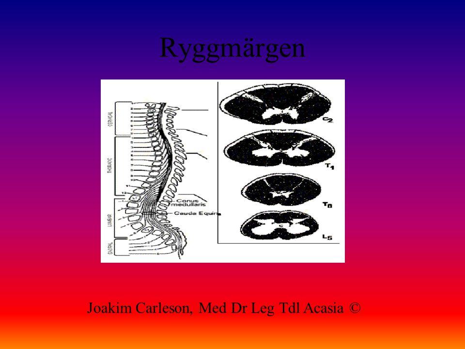 Ryggmärgen Joakim Carleson, Med Dr Leg Tdl Acasia ©