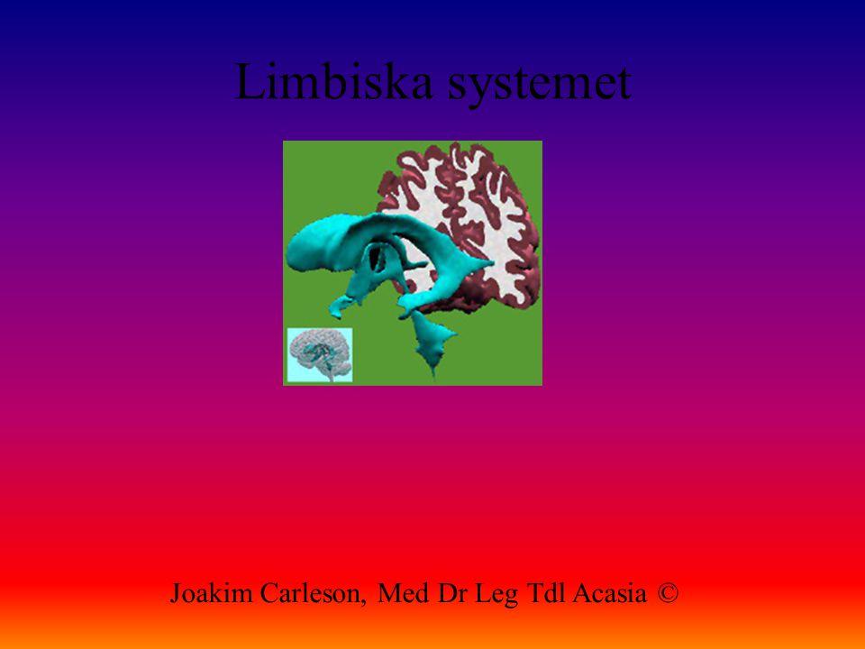 Limbiska systemet Joakim Carleson, Med Dr Leg Tdl Acasia ©