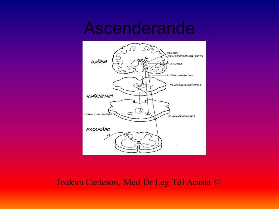 Grind kontroll Joakim Carleson, Med Dr Leg Tdl Acasia ©