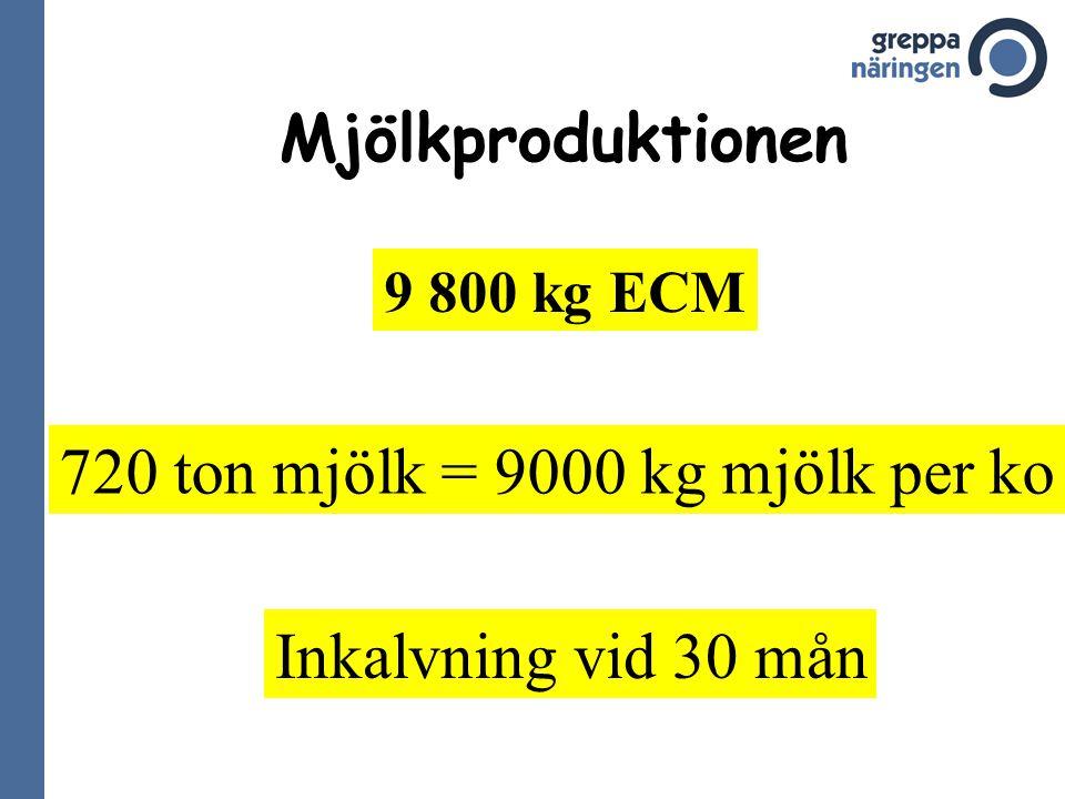 Mjölkproduktionen 9 800 kg ECM 720 ton mjölk = 9000 kg mjölk per ko Inkalvning vid 30 mån