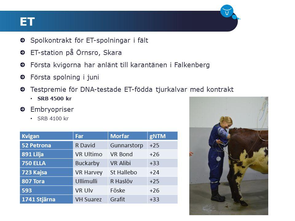 Spolkontrakt för ET-spolningar i fält ET-station på Örnsro, Skara Första kvigorna har anlänt till karantänen i Falkenberg Första spolning i juni Testp