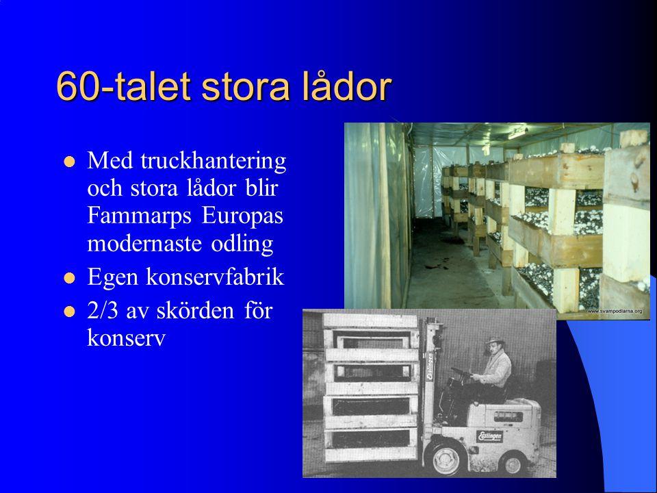 60-talet stora lådor Med truckhantering och stora lådor blir Fammarps Europas modernaste odling Egen konservfabrik 2/3 av skörden för konserv