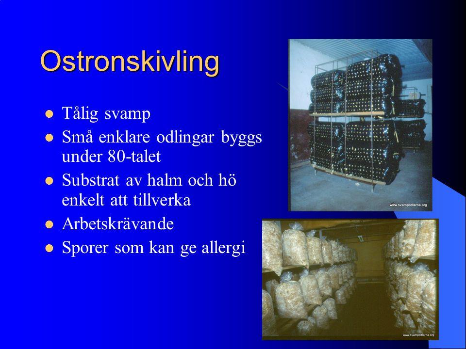 Ostronskivling Tålig svamp Små enklare odlingar byggs under 80-talet Substrat av halm och hö enkelt att tillverka Arbetskrävande Sporer som kan ge all