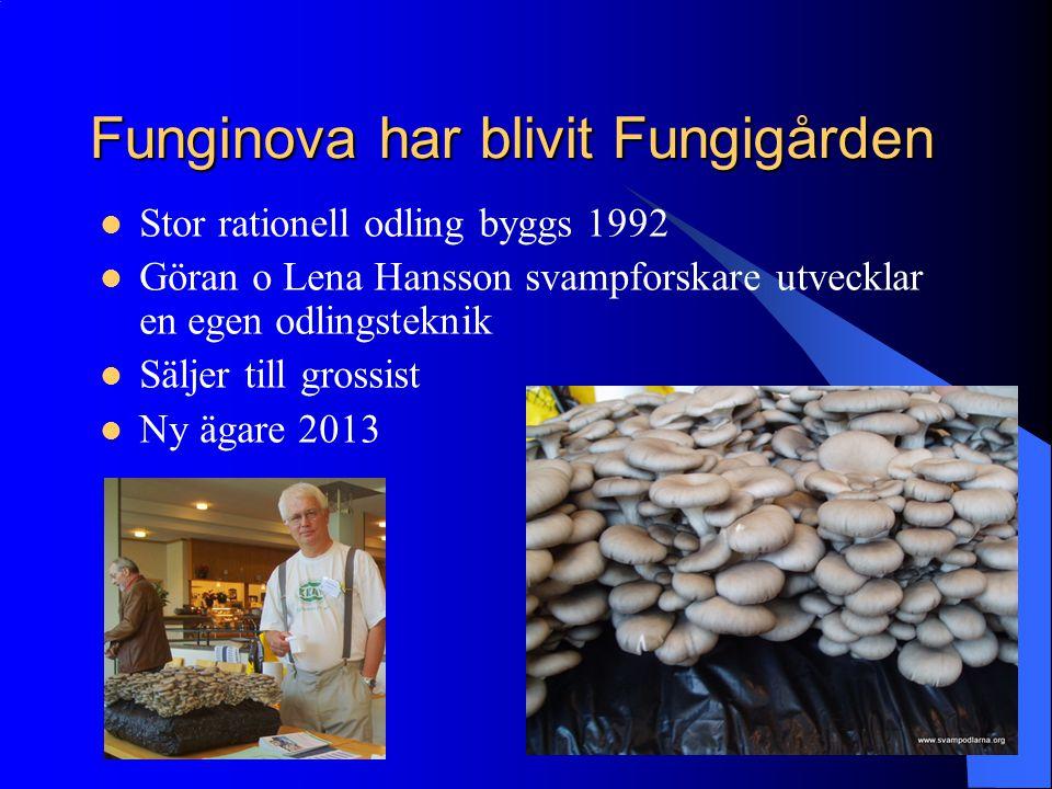 Funginova har blivit Fungigården Stor rationell odling byggs 1992 Göran o Lena Hansson svampforskare utvecklar en egen odlingsteknik Säljer till gross