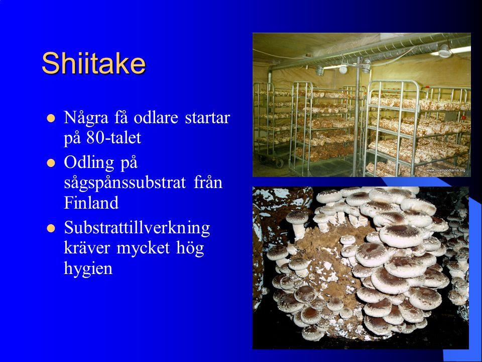 Shiitake Några få odlare startar på 80-talet Odling på sågspånssubstrat från Finland Substrattillverkning kräver mycket hög hygien