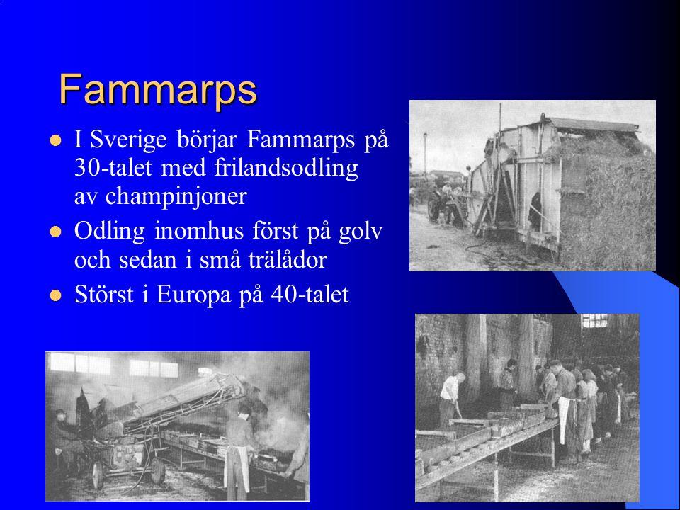 Fammarps I Sverige börjar Fammarps på 30-talet med frilandsodling av champinjoner Odling inomhus först på golv och sedan i små trälådor Störst i Europ