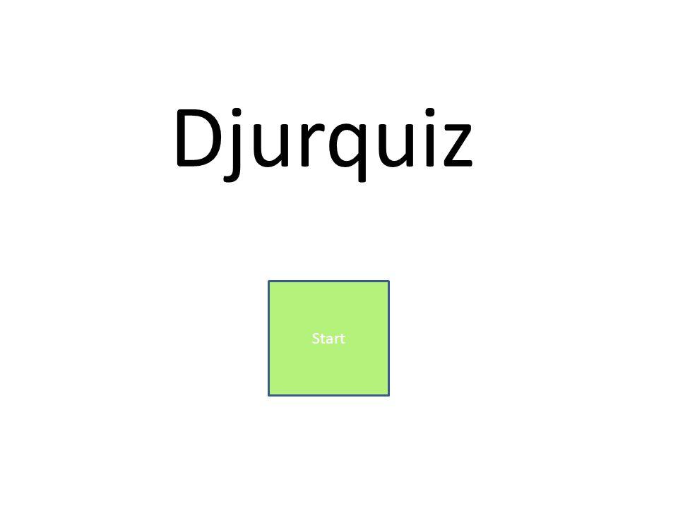Djurquiz Start