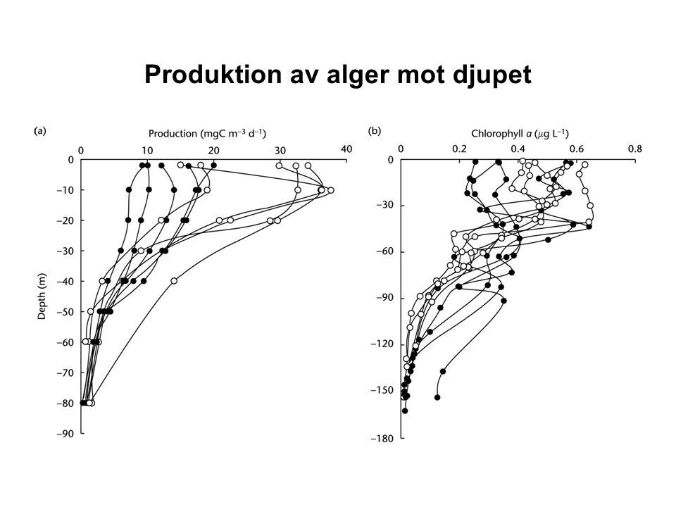 Växtplankton Djurplankton Näring Relativ ökning Omrörning Skiktning Ljus Temperatur Vårblomning