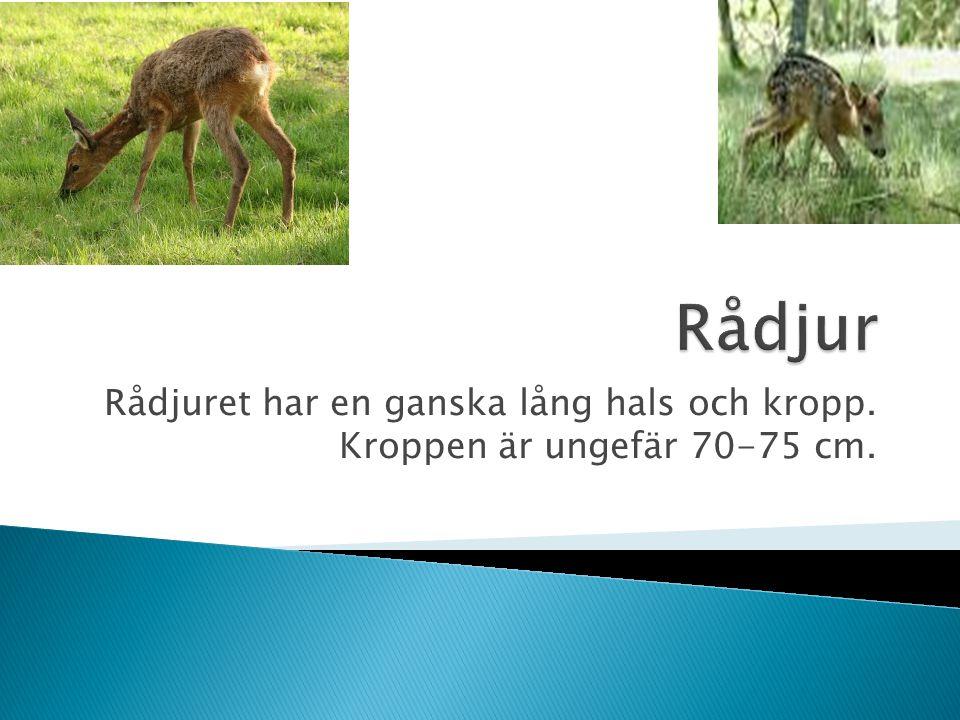 Nästan i hela Sverige finns det rådjur man kan se dom på alla olika årstider.