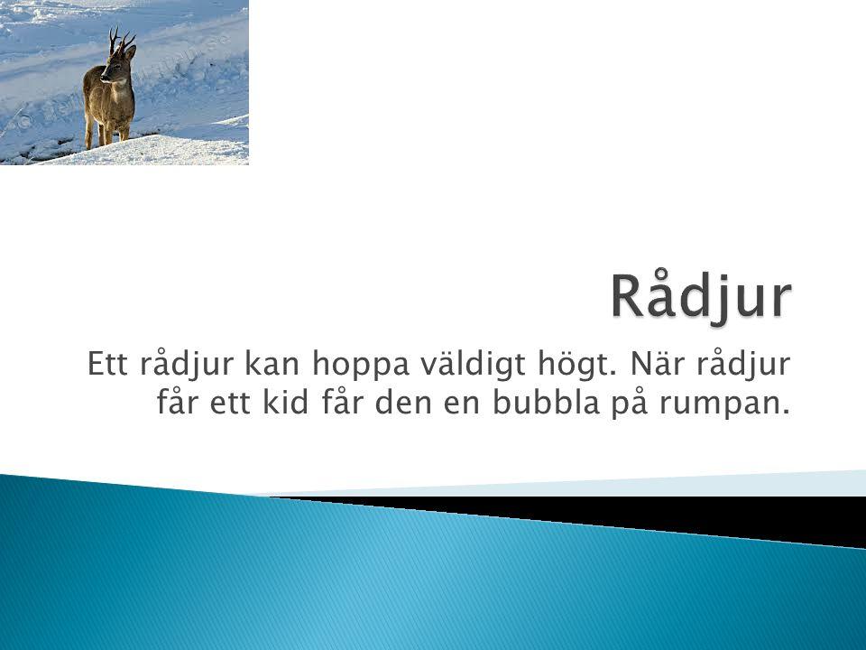 Ett rådjur kan hoppa väldigt högt. När rådjur får ett kid får den en bubbla på rumpan.
