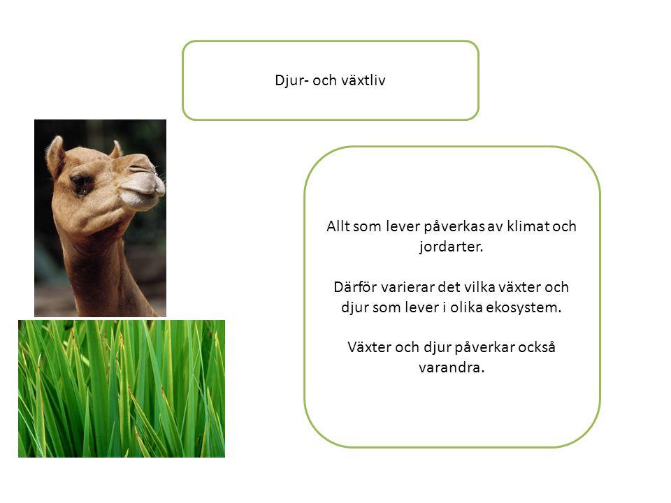 Djur- och växtliv Allt som lever påverkas av klimat och jordarter. Därför varierar det vilka växter och djur som lever i olika ekosystem. Växter och d