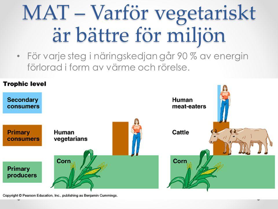 MAT – Varför vegetariskt är bättre för miljön För varje steg i näringskedjan går 90 % av energin förlorad i form av värme och rörelse.