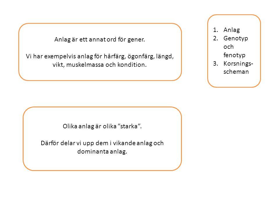 1.Anlag 2.Genotyp och fenotyp 3.Korsnings- scheman Anlag är ett annat ord för gener. Vi har exempelvis anlag för hårfärg, ögonfärg, längd, vikt, muske