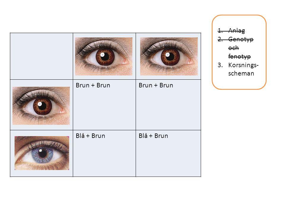 1.Anlag 2.Genotyp och fenotyp 3.Korsnings- scheman Brun + Brun Blå + Brun