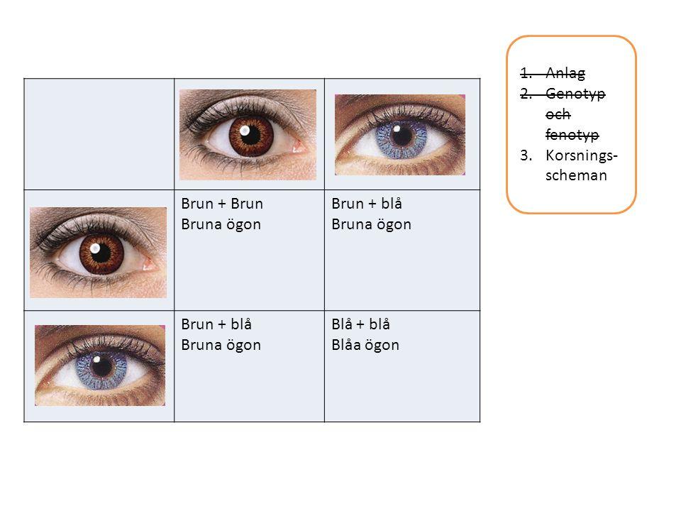 1.Anlag 2.Genotyp och fenotyp 3.Korsnings- scheman Brun + Brun Bruna ögon Brun + blå Bruna ögon Brun + blå Bruna ögon Blå + blå Blåa ögon