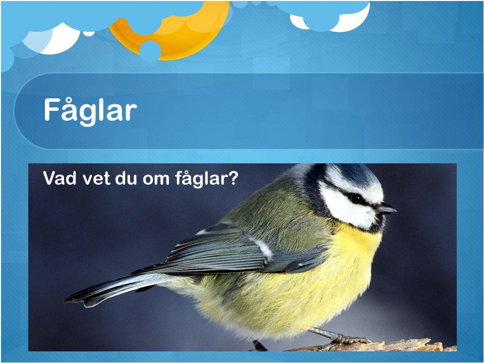 Fåglar Vad vet du om fåglar?