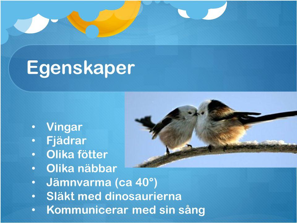 Egenskaper Vingar Fjädrar Olika fötter Olika näbbar Jämnvarma (ca 40°) Släkt med dinosaurierna Kommunicerar med sin sång