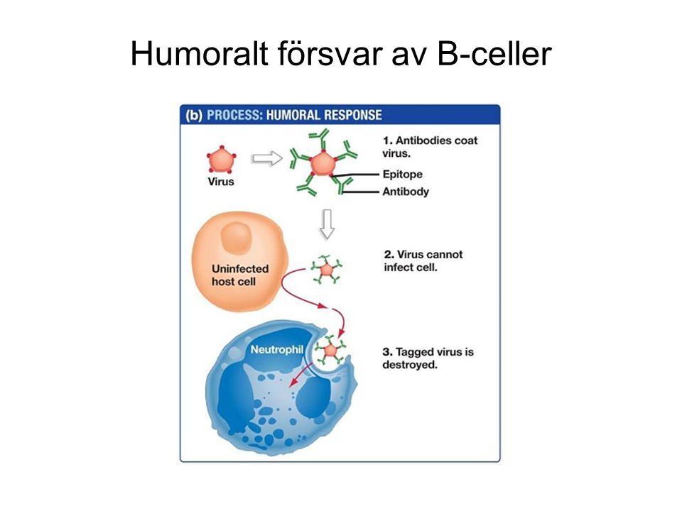 Humoralt försvar av B-celler
