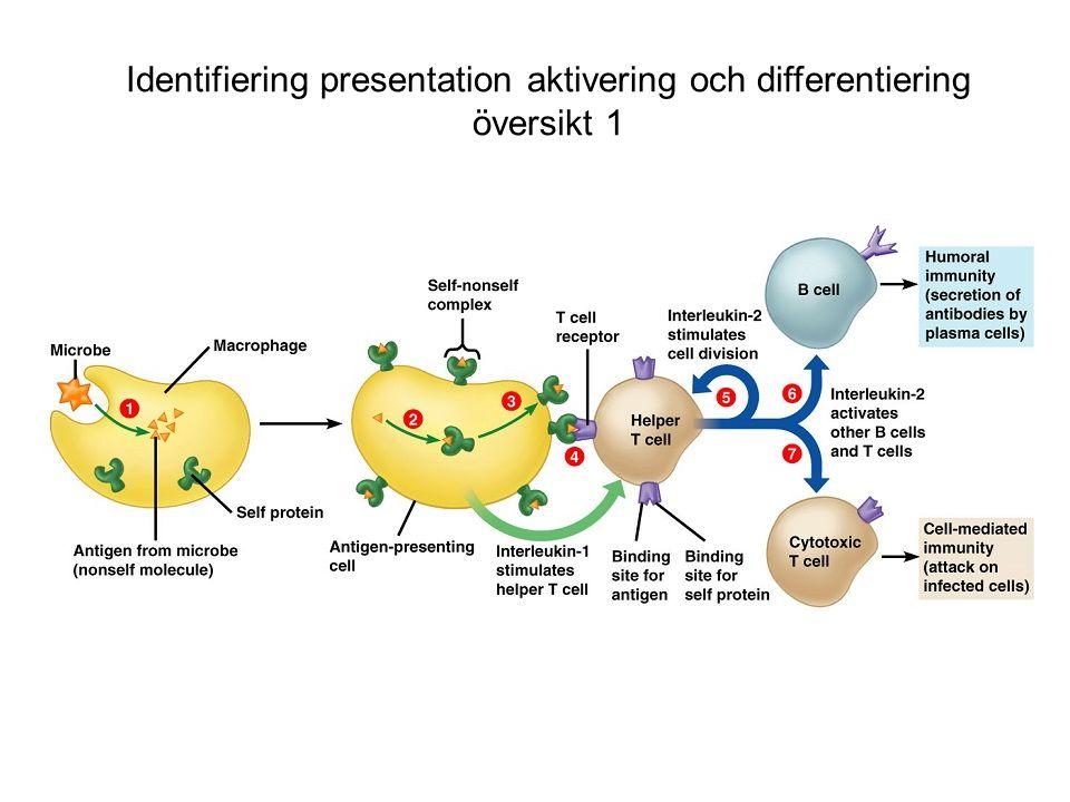 Identifiering presentation aktivering och differentiering översikt 1