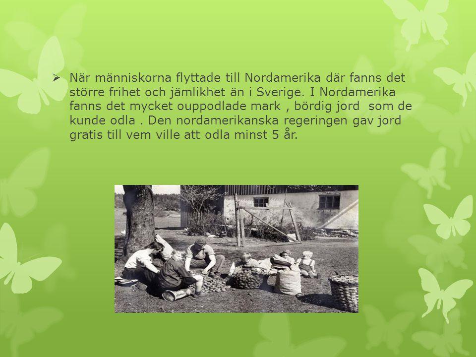  När människorna flyttade till Nordamerika där fanns det större frihet och jämlikhet än i Sverige. I Nordamerika fanns det mycket ouppodlade mark, bö