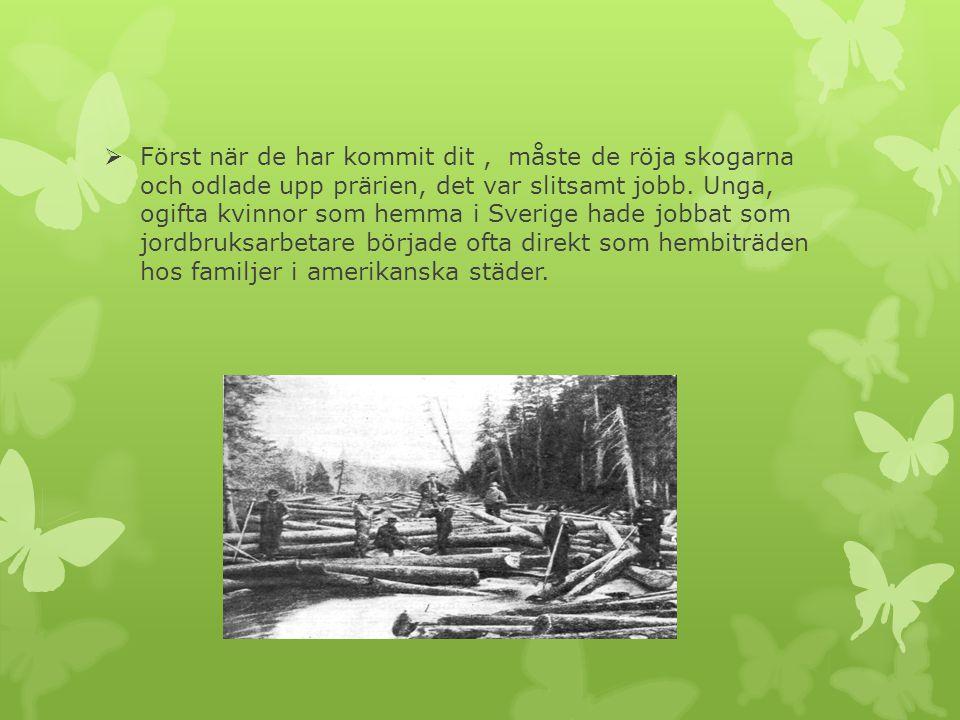  Först när de har kommit dit, måste de röja skogarna och odlade upp prärien, det var slitsamt jobb. Unga, ogifta kvinnor som hemma i Sverige hade job
