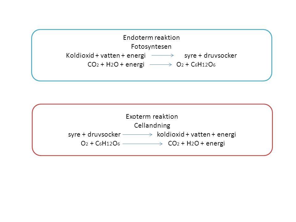 Endoterm reaktion Fotosyntesen Koldioxid + vatten + energisyre + druvsocker CO 2 + H 2 O + energiO 2 + C 6 H 12 O 6 Exoterm reaktion Cellandning syre