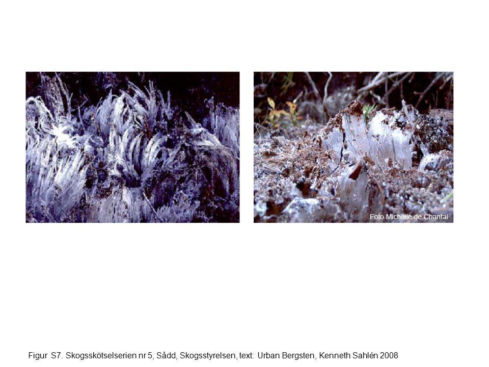 Figur S7. Skogsskötselserien nr 5, Sådd, Skogsstyrelsen, text: Urban Bergsten, Kenneth Sahlén 2008