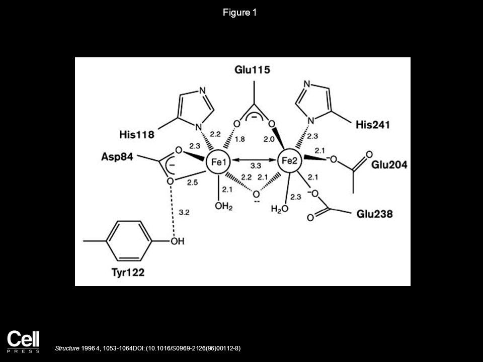 Figure 1 Structure 1996 4, 1053-1064DOI: (10.1016/S0969-2126(96)00112-8)