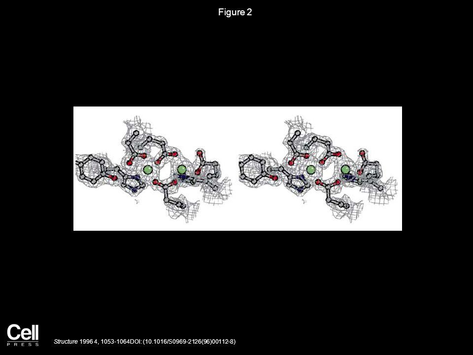 Figure 2 Structure 1996 4, 1053-1064DOI: (10.1016/S0969-2126(96)00112-8)