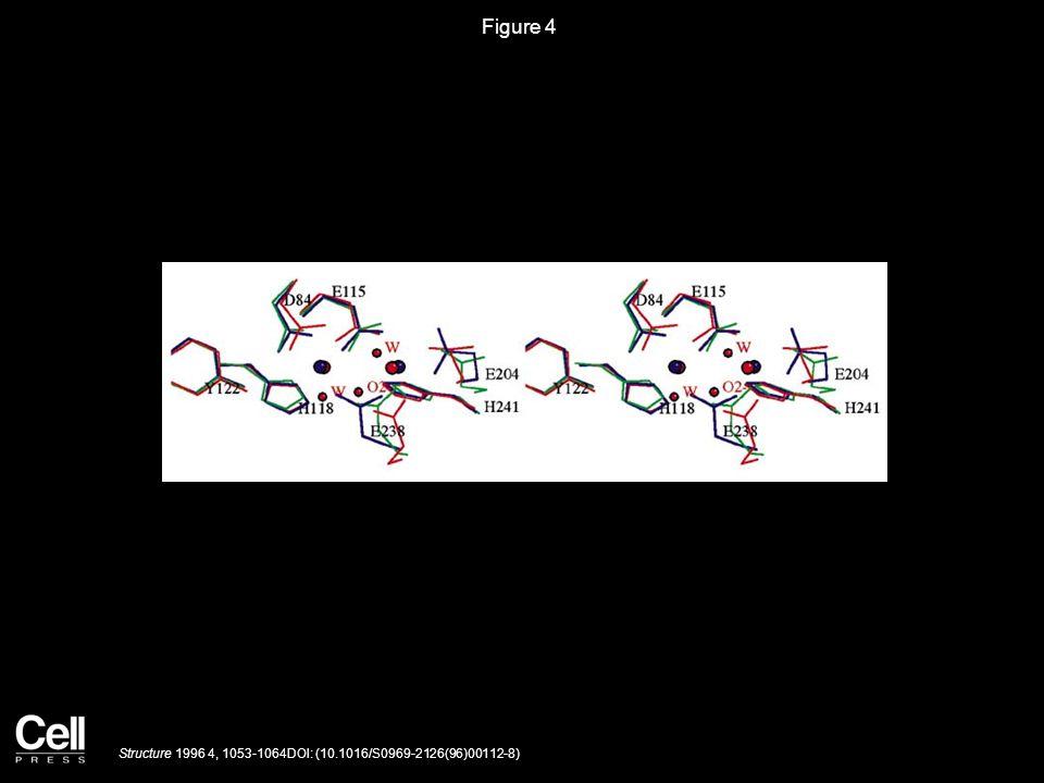 Figure 5 Structure 1996 4, 1053-1064DOI: (10.1016/S0969-2126(96)00112-8)