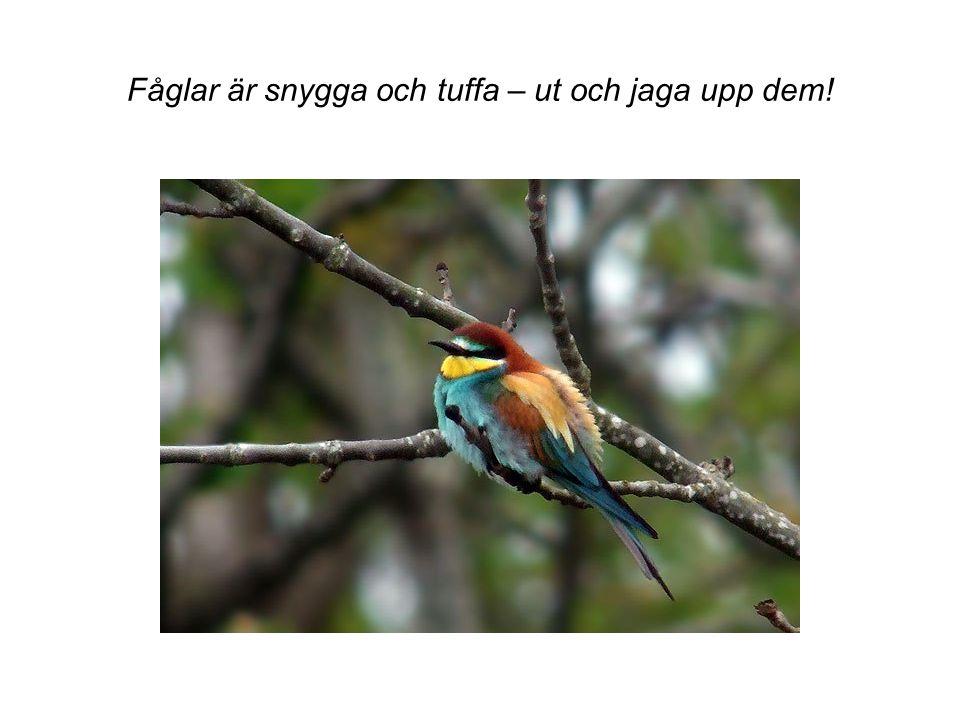 Fåglar är snygga och tuffa – ut och jaga upp dem!