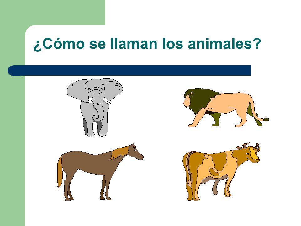 Några djur! un elefante un tigre una cebra una jirafa un cocodrilo
