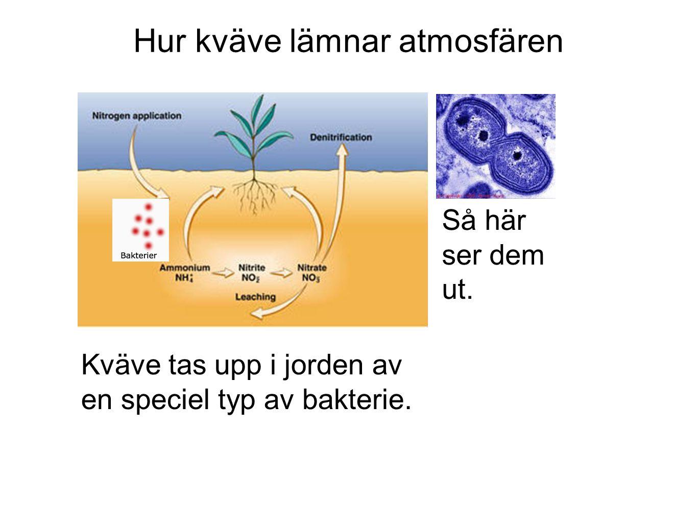Hur kväve lämnar atmosfären Kväve tas upp i jorden av en speciel typ av bakterie.