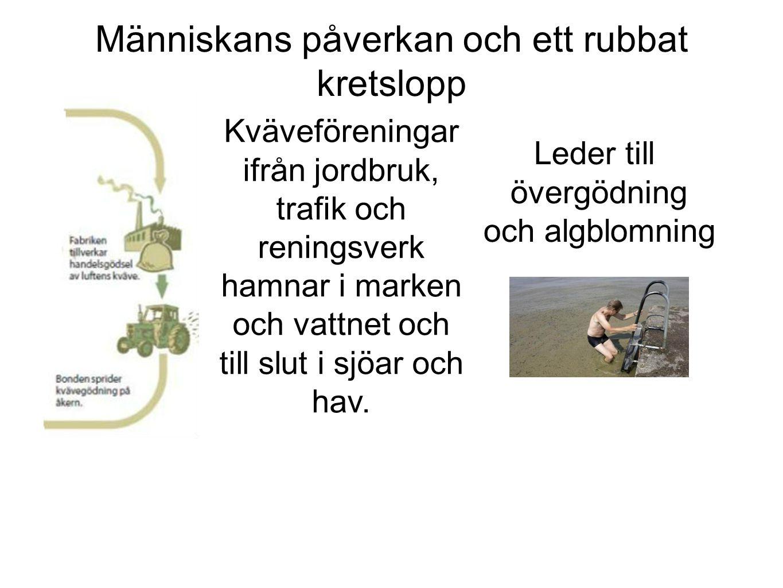 Människans påverkan och ett rubbat kretslopp Kväveföreningar ifrån jordbruk, trafik och reningsverk hamnar i marken och vattnet och till slut i sjöar och hav.