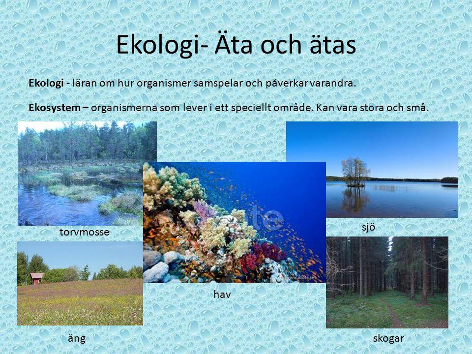 Ekologi- Äta och ätas Ekologi - läran om hur organismer samspelar och påverkar varandra. Ekosystem – organismerna som lever i ett speciellt område. Ka
