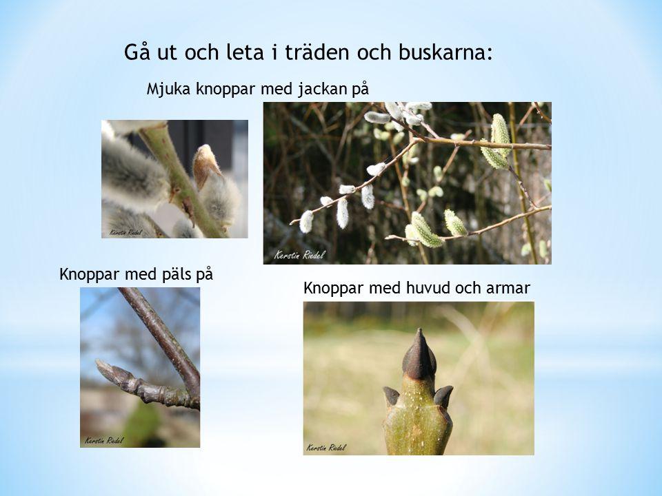 Gå ut och leta i träden och buskarna: Mjuka knoppar med jackan på Knoppar med päls på Knoppar med huvud och armar