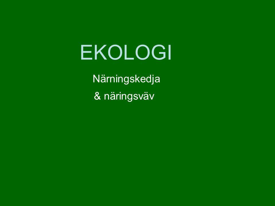 EKOLOGI Närningskedja & näringsväv