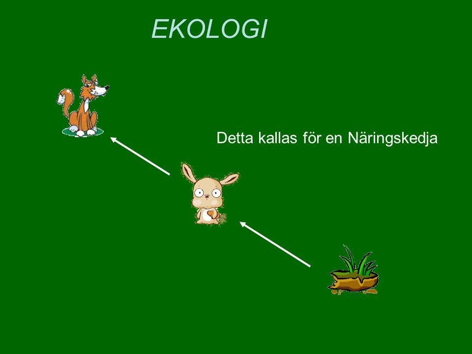Det kan ju också vara en buske Som äts av kaninen Som den här gången äts av en varg EKOLOGI