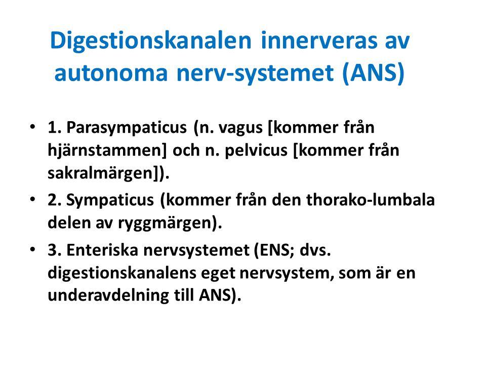 Digestionskanalen innerveras av autonoma nerv-systemet (ANS) 1. Parasympaticus (n. vagus [kommer från hjärnstammen] och n. pelvicus [kommer från sakra