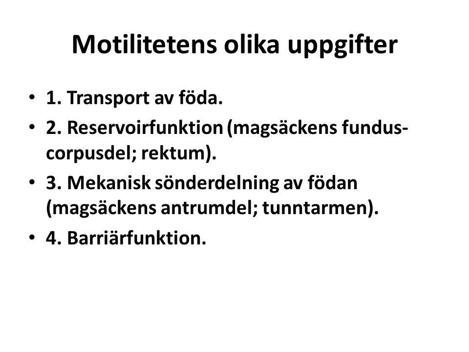 Motilitetens olika uppgifter 1. Transport av föda. 2. Reservoirfunktion (magsäckens fundus- corpusdel; rektum). 3. Mekanisk sönderdelning av födan (ma